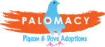 Palomacy Pigeon and Dove Adoption a Project of Community Initiatives